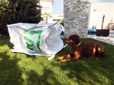 hund-mit-big-bag-schattenplatz-abfall-service-online